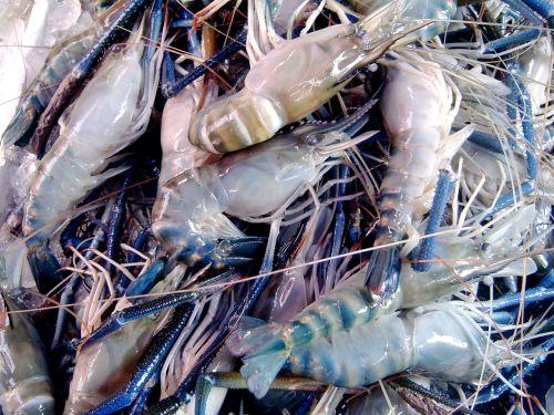 prawns in the market